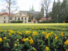 Předjaří v Královské zahradě - výhled katedrála