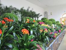 Předjaří v Královské zahradě - jarní květiny