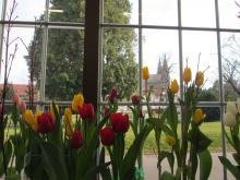 Předjaří v Královské zahradě - tulipány, tentokrát s katedrálou